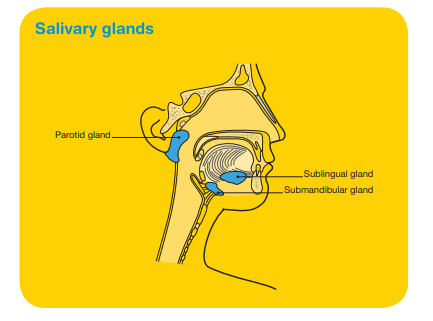 A diagram of the Salivary glands