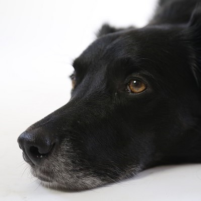 People with cancer should not have to put up with depression - the black dog - and anxiety