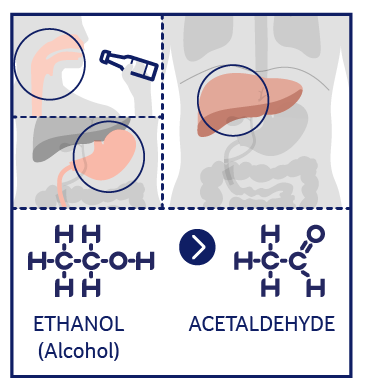 Ethanol converts to acetaldehyde