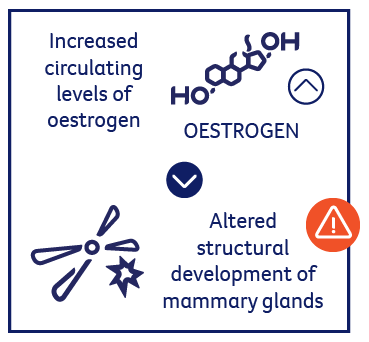 Increased circulating levels of oestrogen alters structural development of mammary glands